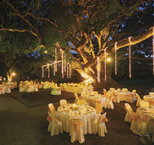 Weddings in mauritius mauritius wedding venues packages chateau de bel ombre junglespirit Gallery